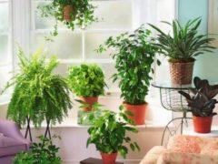 Топ 16 растений, которые очищают воздух в доме