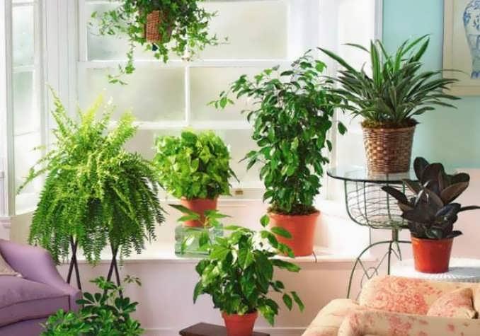 Какие растения очищают воздух в квартире